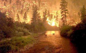 Dampak Pemanasan Global Jauh Lebih Buruk forest fire 2