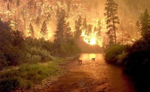 Dampak Pemanasan Global Jauh Lebih Buruk forest fire 5