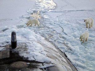 42% Kutub Utara dan 75% Kutub Selatan Telah Hilang north pole bears 1