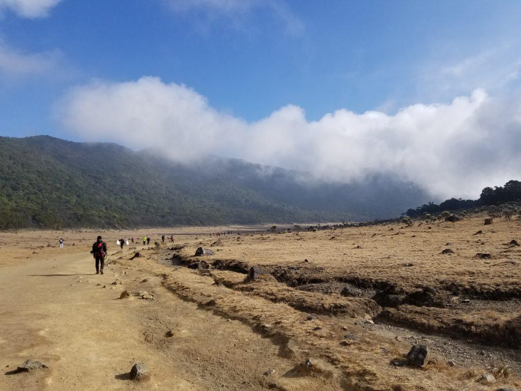 Pendakian Gunung Gede: Putri Lintas Cibodas - Menuju Surya Kencana (2/3) Jalur Surya Kencana Gunung Gede 10