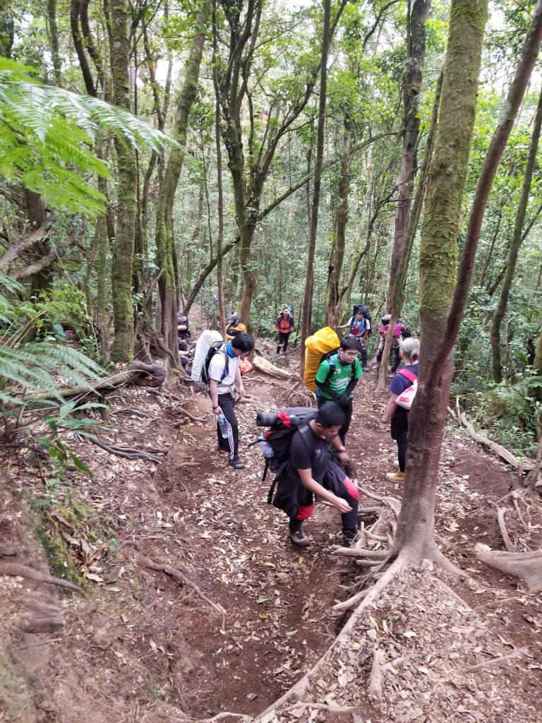 Pendakian Gunung Gede: Putri Lintas Cibodas - Menuju Surya Kencana (2/3) Mendaki Gunung Gede Jalur Putri 5