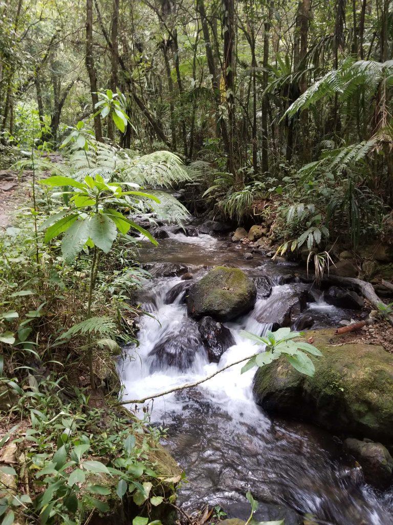 Sungai Curug Cibeureum - Cibodas