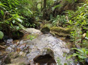 Sungai Yang Indah - Cibodas, Gunung Gede