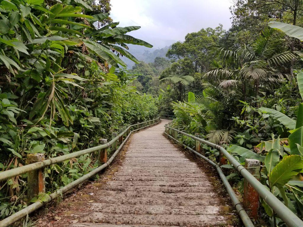 Track Kayu - Cibodas, Gunung Gede