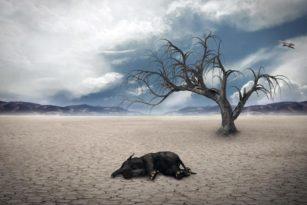 Global Warming Sebabkan Mass Extinction Kepunahan Masal 1