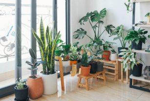 Indoor Plant - Tanaman Dalam Ruangan